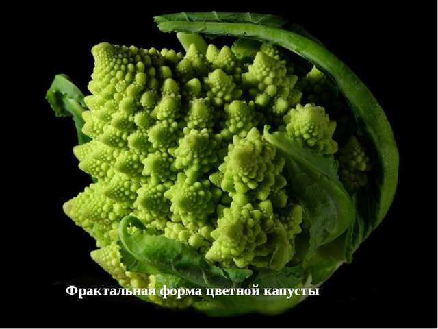 Фрактальная форма цветной капусты