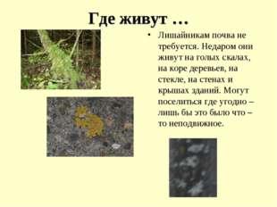 Где живут … Лишайникам почва не требуется. Недаром они живут на голых скалах,