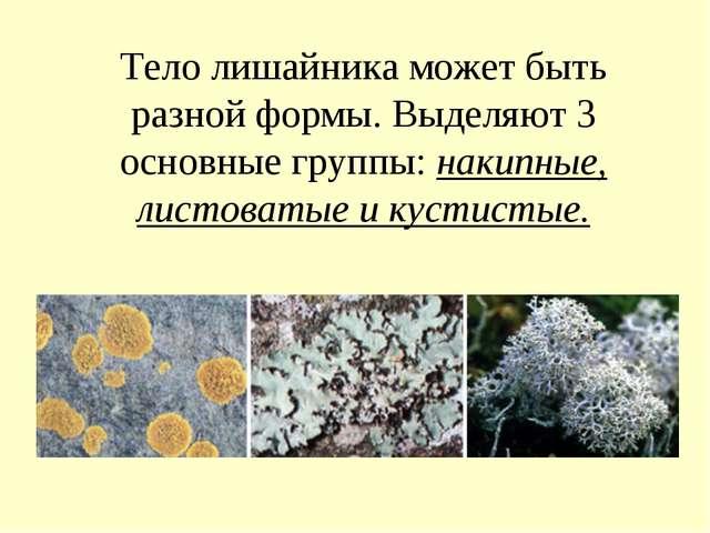 Тело лишайника может быть разной формы. Выделяют 3 основные группы: накипные,...