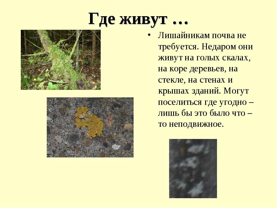 Где живут … Лишайникам почва не требуется. Недаром они живут на голых скалах,...