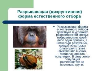Разрывающая (дизруптивная) форма естественного отбора Разрывающая форма естес