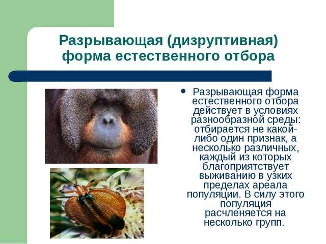 Разрывающая (дизруптивная) форма естественного отбора Разрывающая форма естес...