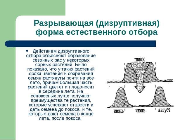 Разрывающая (дизруптивная) форма естественного отбора Действием дизруптивного...