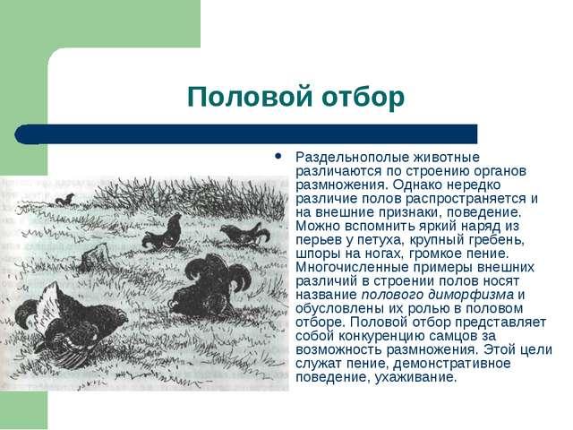 Половой отбор Раздельнополые животные различаются по строению органов размнож...