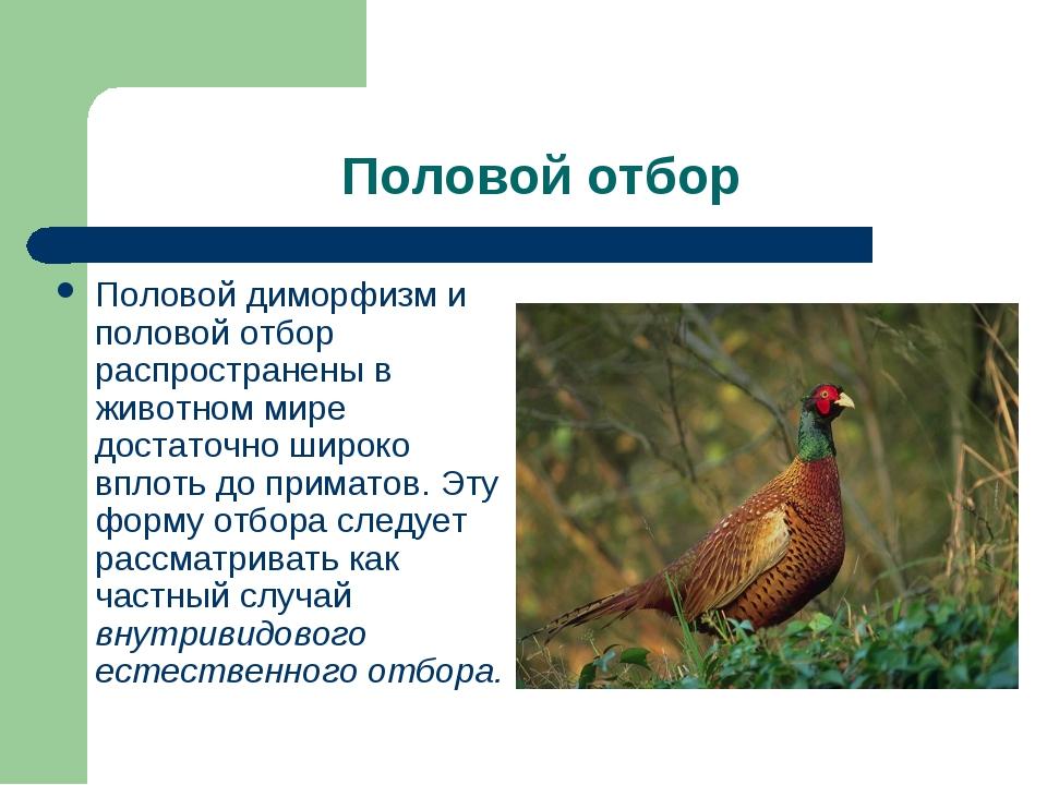 Половой отбор Половой диморфизм и половой отбор распространены в животном мир...