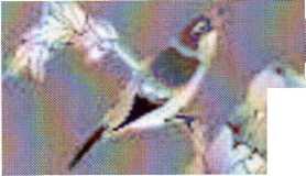 hello_html_352bdd00.jpg