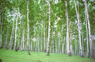 D:\Мои документы\Нина\картинки\лес.jpeg