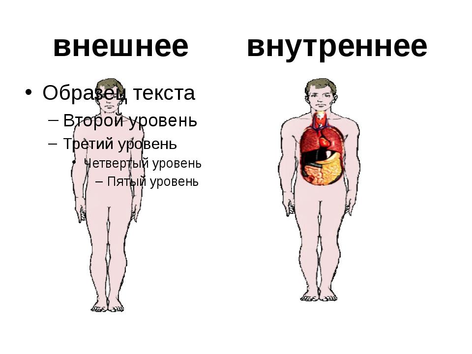 органы головной мозг лёгкие сердце печень желудок кишечник