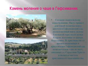 Камень моления о чаше в Гефсимании. Согласно евангельскому повествованию, Иис