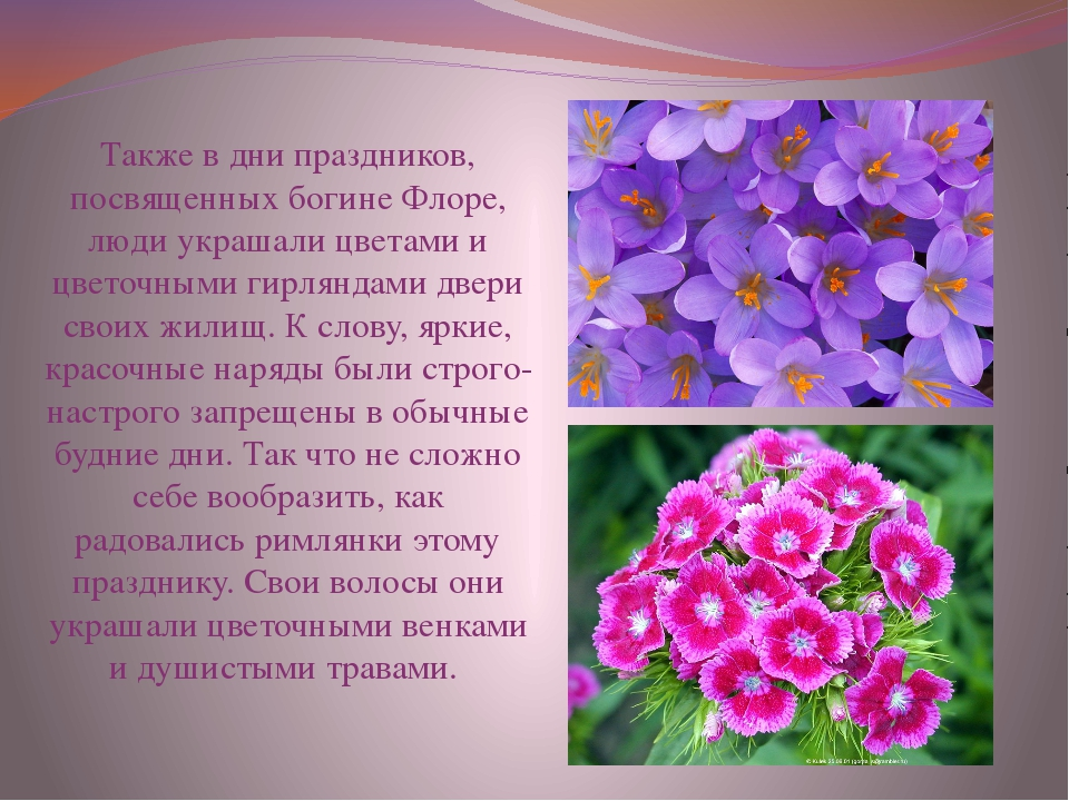 Также в дни праздников, посвященных богине Флоре, люди украшали цветами и цве...