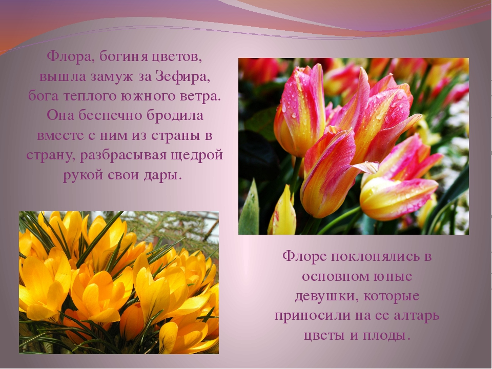 Флора, богиня цветов, вышла замуж за Зефира, бога теплого южного ветра. Она б...