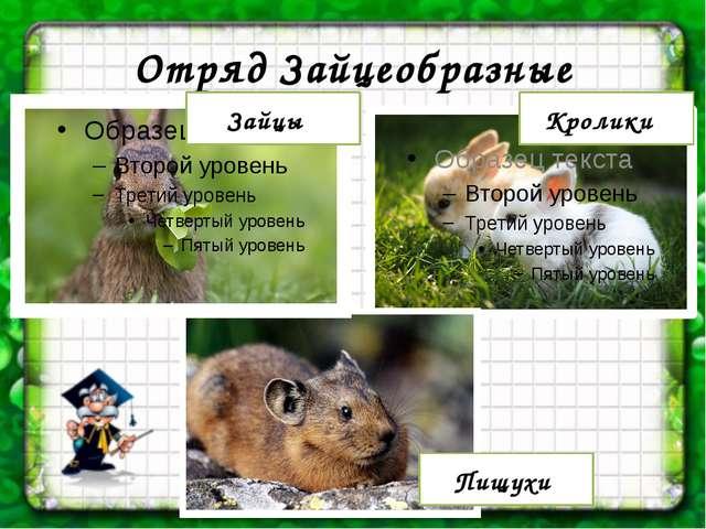 Отряд Зайцеобразные Кролики Зайцы Пищухи