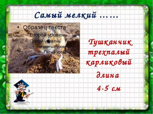 Самый мелкий …… Тушканчик трехпалый карликовый длина 4-5 см