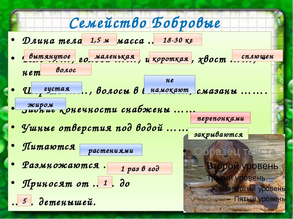 Семейство Бобровые Длина тела ……, масса ….. Тело ……, голова ……, шея ……, хвост...