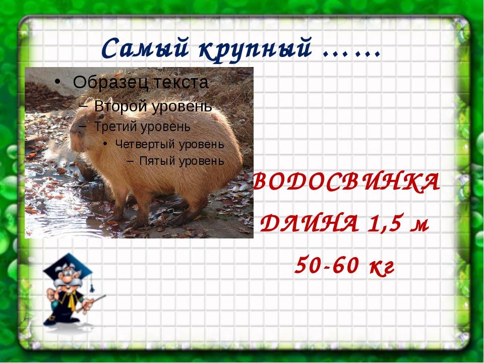 Самый крупный …… ВОДОСВИНКА ДЛИНА 1,5 м 50-60 кг