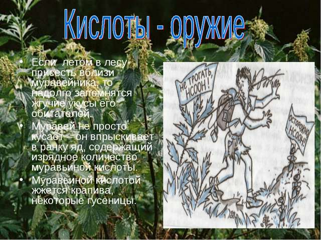 Если летом в лесу присесть вблизи муравейника, то надолго запомнятся жгучие у...