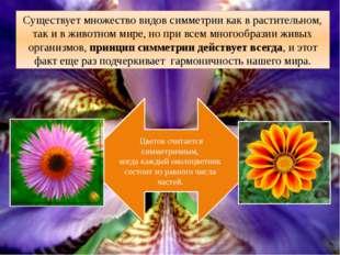 . Существует множество видов симметрии как в растительном, так и в животном м