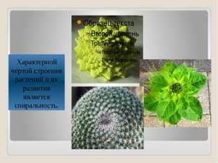Характерной чертой строения растений и их развития является спиральность.