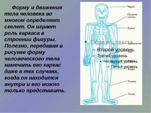 Форму и движения тела человека во многом определяет скелет. Он играет роль к