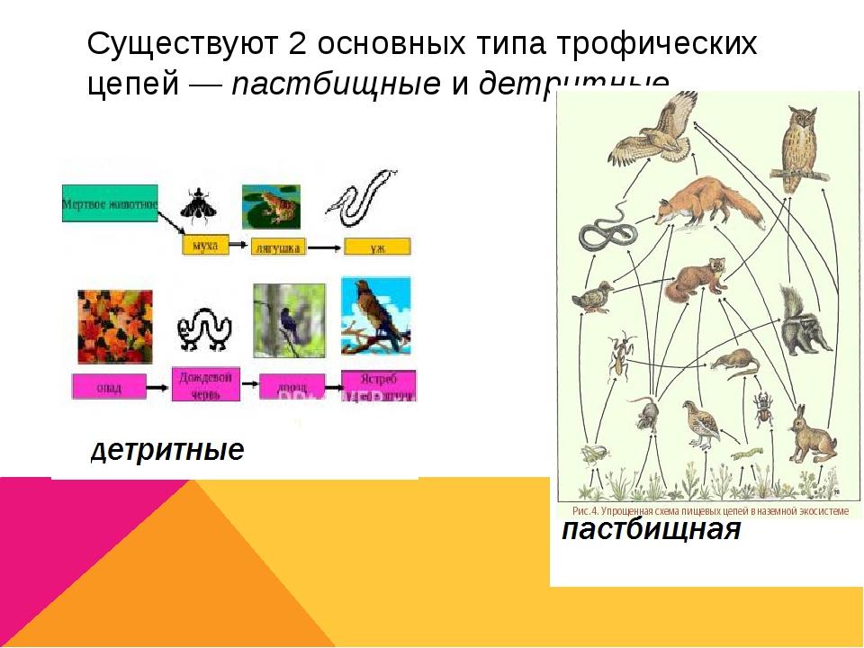 Существуют 2 основных типа трофических цепей—пастбищныеидетритные.