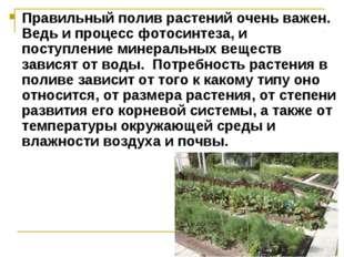 Правильный полив растений очень важен. Ведь и процесс фотосинтеза, и поступле