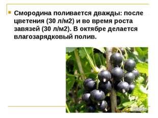 Смородина поливается дважды: после цветения (30 л/м2) и во время роста завязе