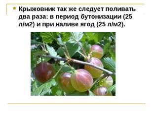 Крыжовник так же следует поливать два раза: в период бутонизации (25 л/м2) и