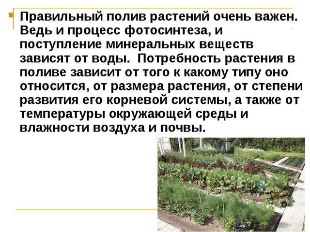 Правильный полив растений очень важен. Ведь и процесс фотосинтеза, и поступле...