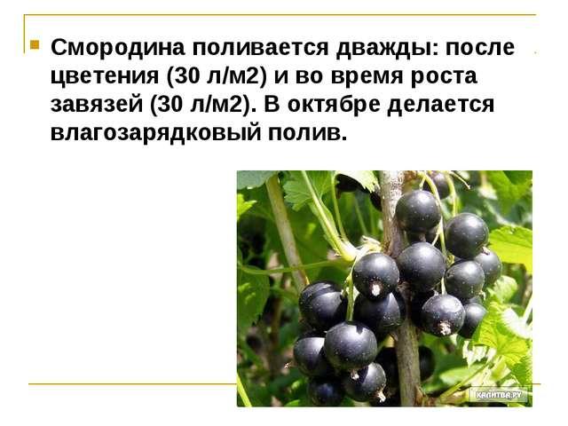 Смородина поливается дважды: после цветения (30 л/м2) и во время роста завязе...
