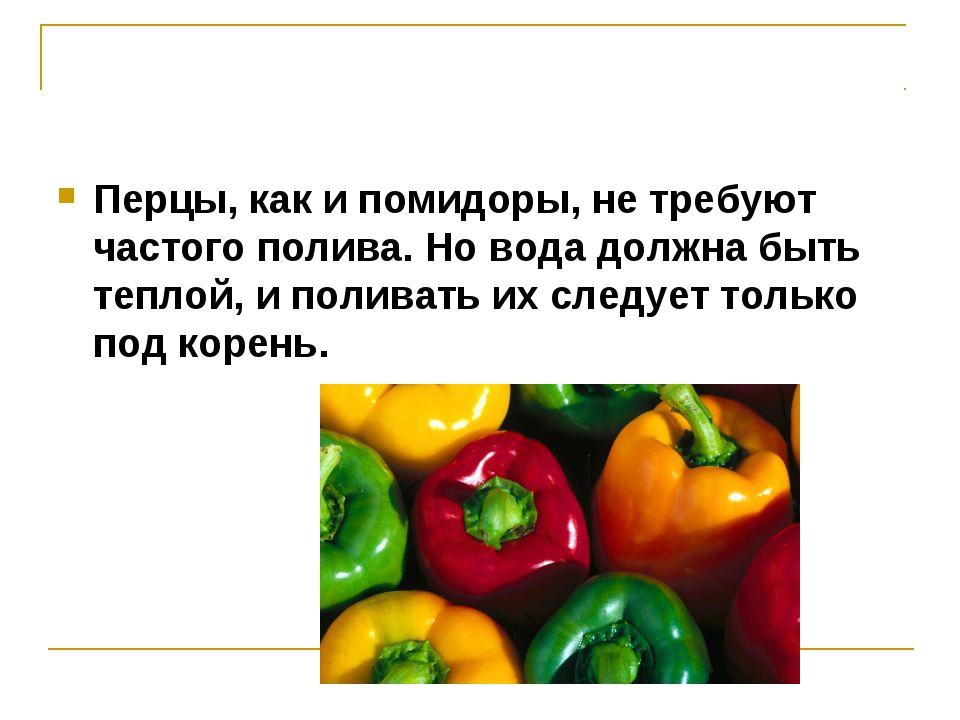 Перцы, как и помидоры, не требуют частого полива. Но вода должна быть теплой,...