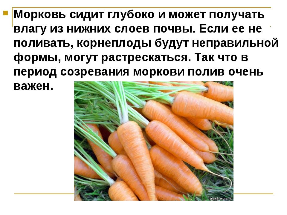 Морковь сидит глубоко и может получать влагу из нижних слоев почвы. Если ее н...