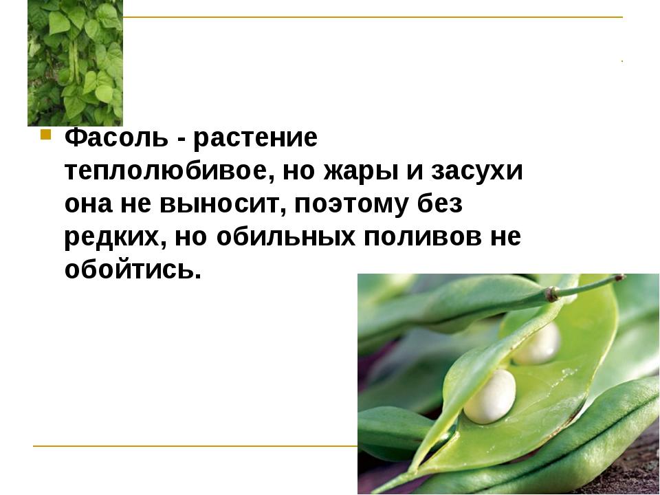 Фасоль - растение теплолюбивое, но жары и засухи она не выносит, поэтому без...