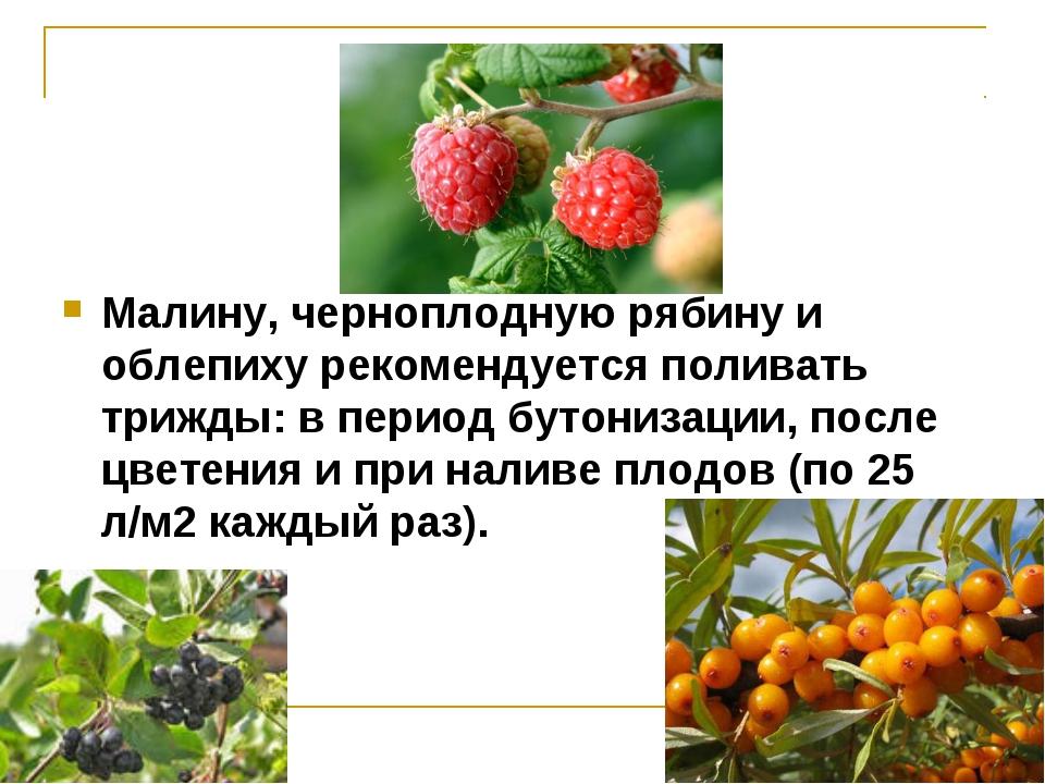 Малину, черноплодную рябину и облепиху рекомендуется поливать трижды: в перио...