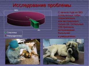 Исследование проблемы Сначала года из563 отловленных собак стерилизовано ил