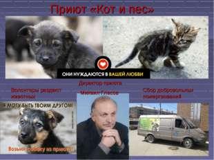Приют «Кот и пес» Директор приюта Михаил Гласов Сбор добровольных пожертвован