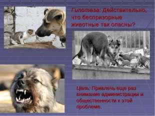 Гипотеза: Действительно, что беспризорные животные так опасны? Цель: Привлечь