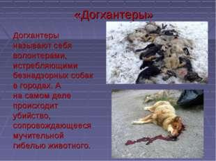 Догхантеры называют себя волонтерами, истребляющими безнадзорных собак в горо