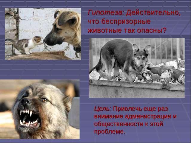 Гипотеза: Действительно, что беспризорные животные так опасны? Цель: Привлечь...