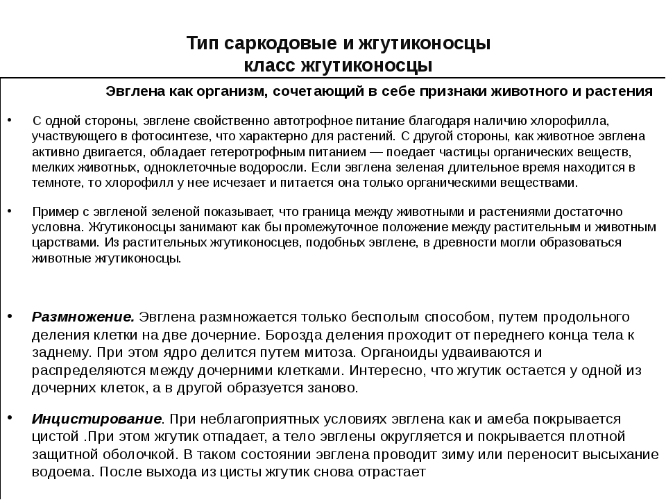 Тип саркодовые и жгутиконосцы класс жгутиконосцы Эвглена как организм, сочета...