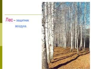 Лес – защитник воздуха.