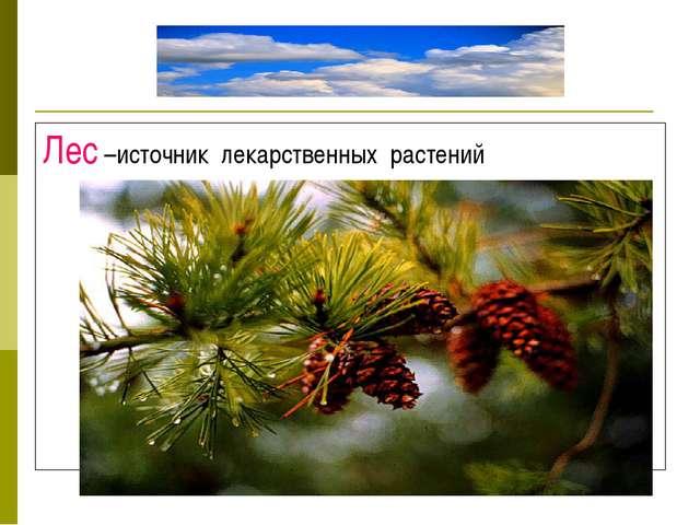 Лес –источник лекарственных растений