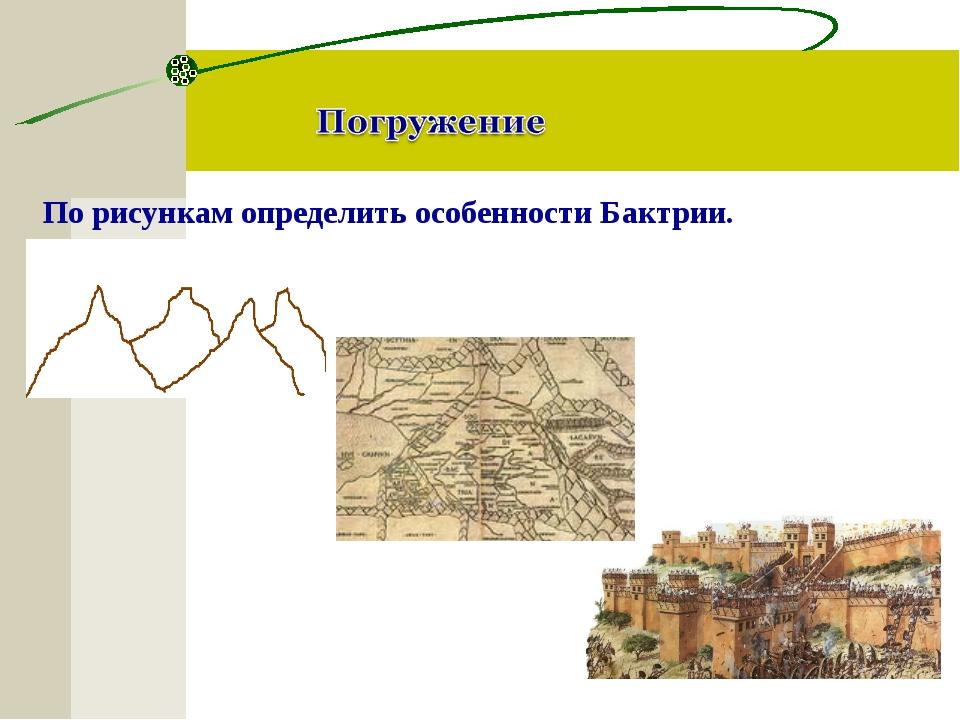 По рисункам определить особенности Бактрии.