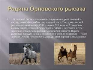 Орловский рысак – это знаменитая русская порода лошадей с наследственной спо