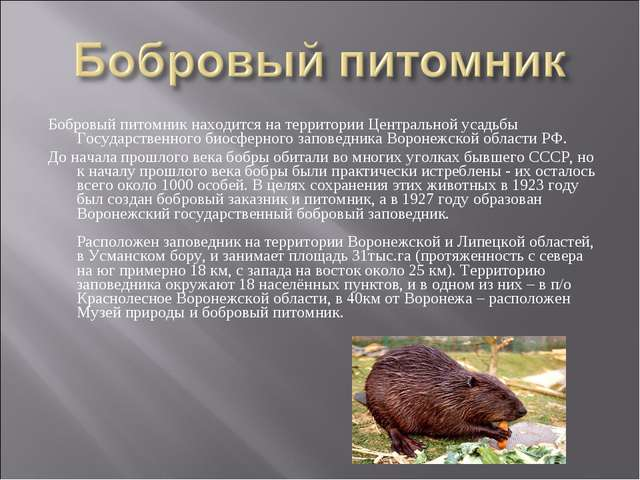 Бобровый питомник находится на территории Центральной усадьбы Государственног...