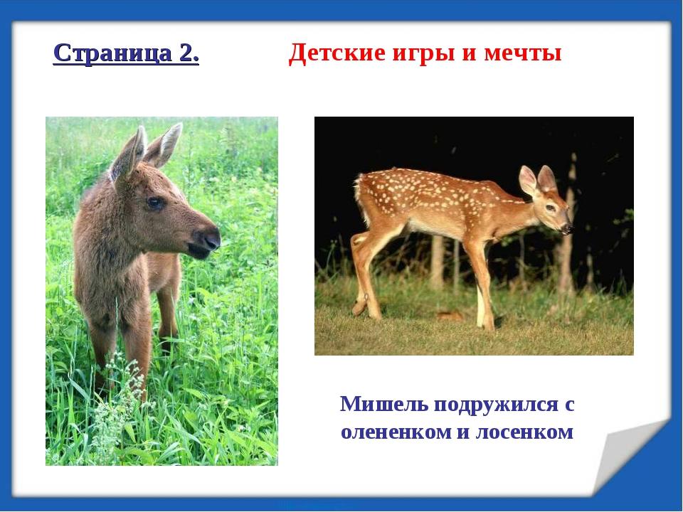 Страница 2. Детские игры и мечты Мишель подружился с олененком и лосенком