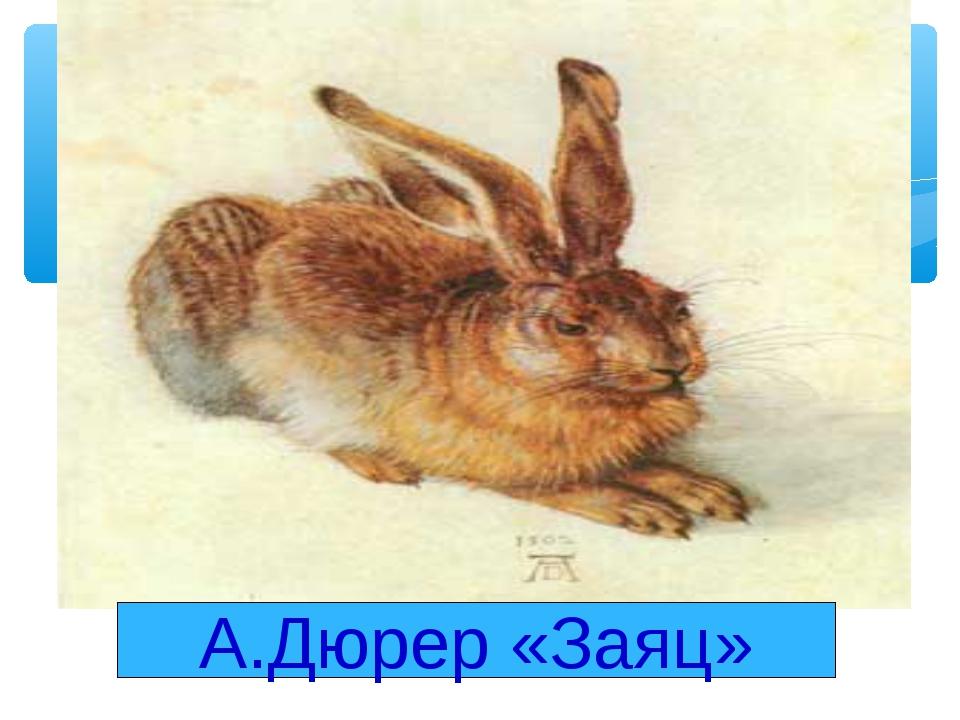 А.Дюрер «Заяц»