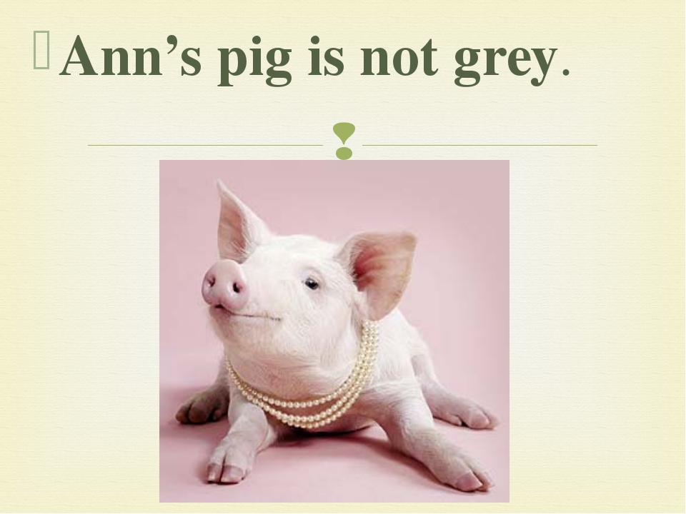 Ann's pig is not grey. 