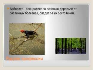Редкие профессии Арборист – специалист по лечению деревьев от различных болез