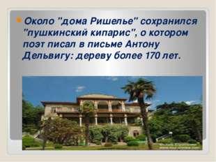 """Около """"дома Ришелье"""" сохранился """"пушкинский кипарис"""", о котором поэт писал в"""