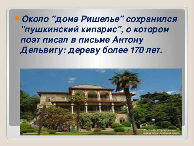 """Около """"дома Ришелье"""" сохранился """"пушкинский кипарис"""", о котором поэт писал в..."""